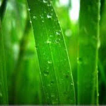 ירוק בבית – בניה ירוקה – למה ואיך